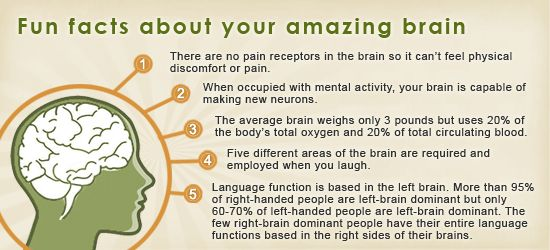 Brain Fun facts and things you can do to sharpen your memory ...