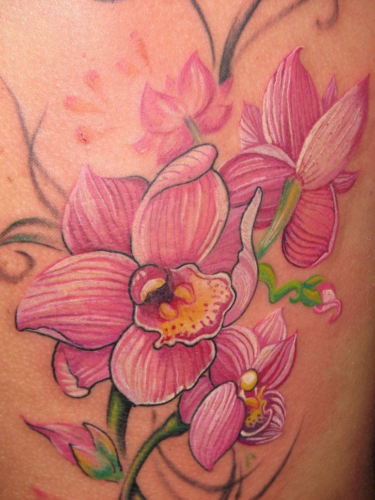 orchid close view by EvlogievaPetja on deviantART