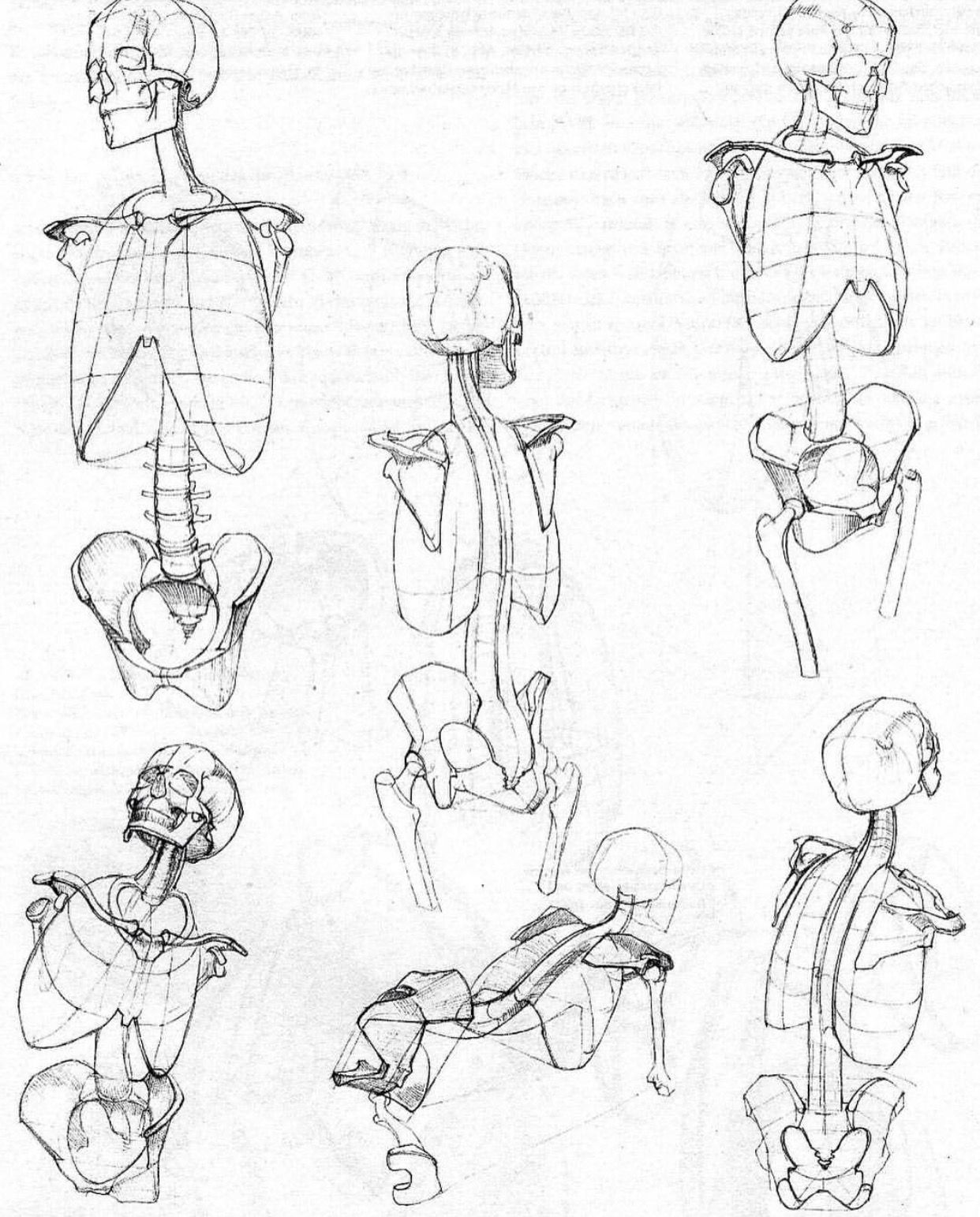 Pin By Jde On Art In 2018 Pinterest Drawings Anatomy Drawing