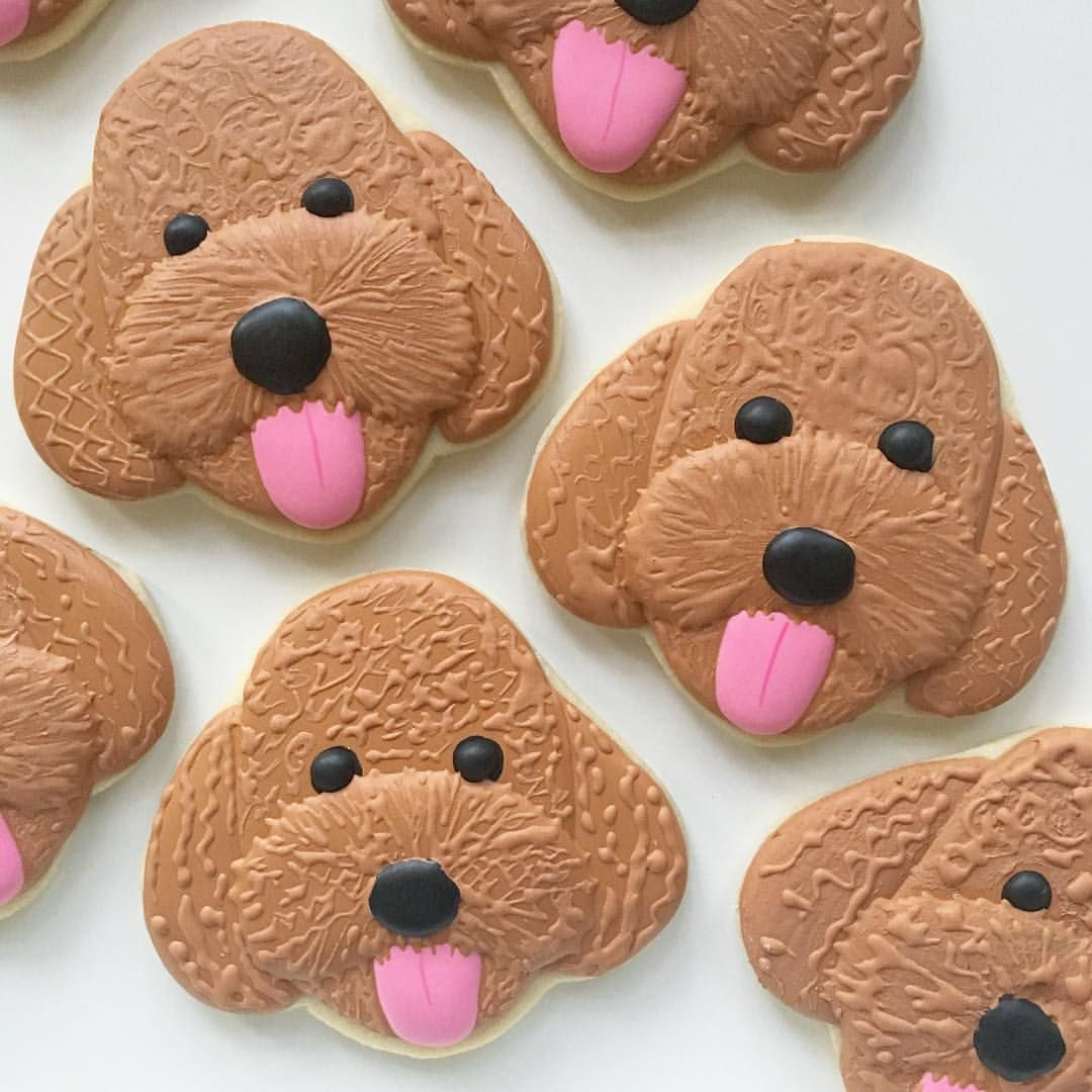 Sugar Fan Club On Instagram Oodles Of Goldendoodles Sugar