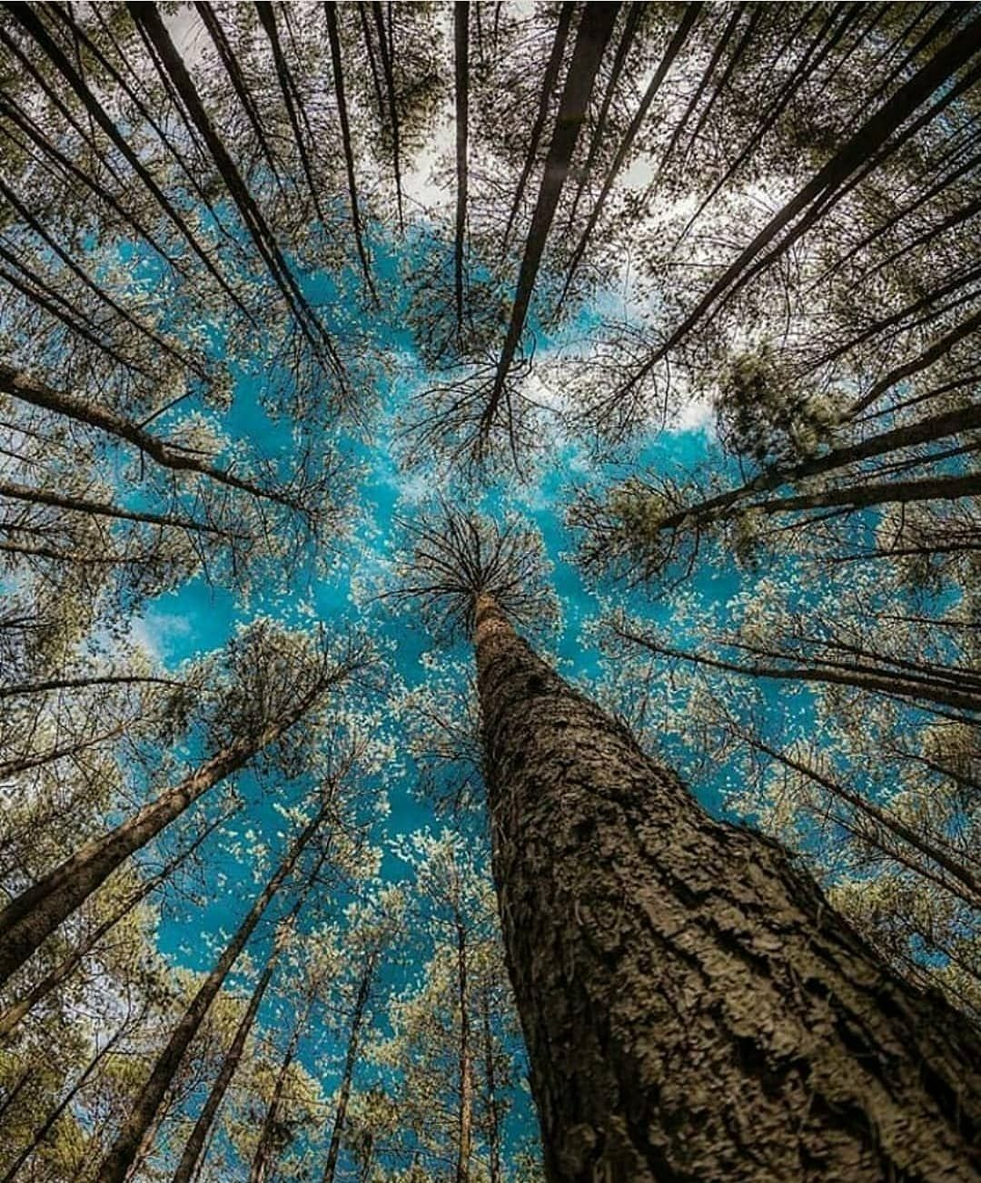 Upside Down Water Trees Perspective Photography Perspective Photos Nature Photography