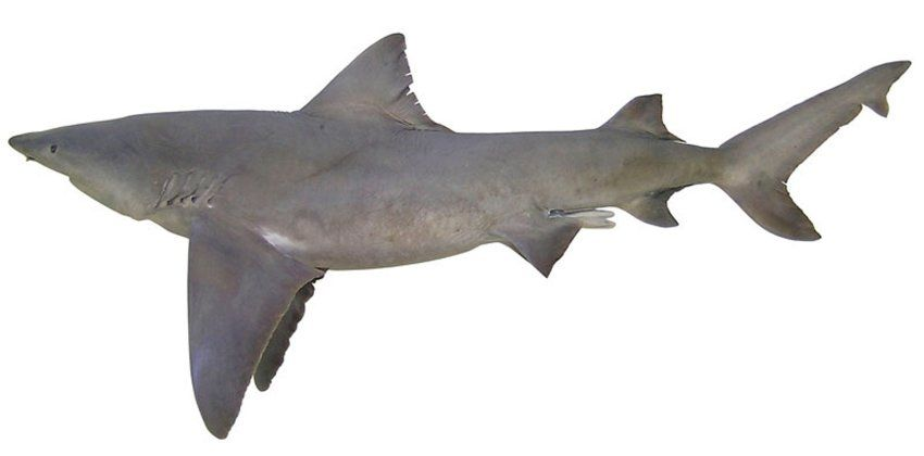 Pin auf Sharks