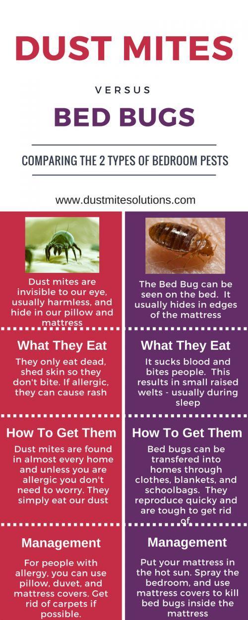 Dust mite bites Dust mites bites, Dust mites, Mites