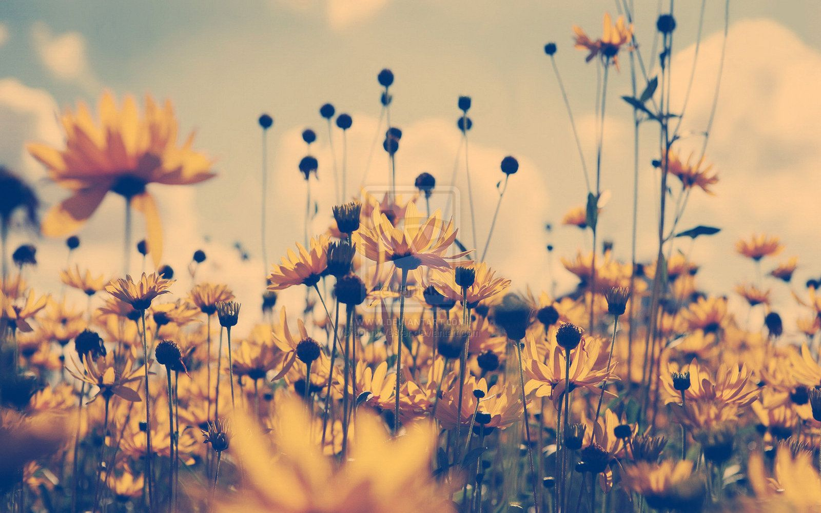 Photography Tumblr Vintage Flowers Hd Images 3 HD Wallpapers