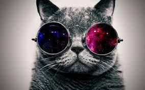 galaxy cat t u m b l r pinterest galaxy cat and illustrations