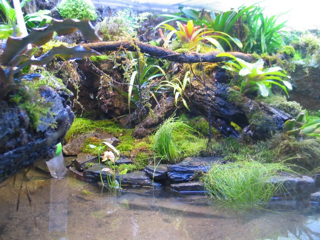 Large vivarium construction page dendroboard terrariums