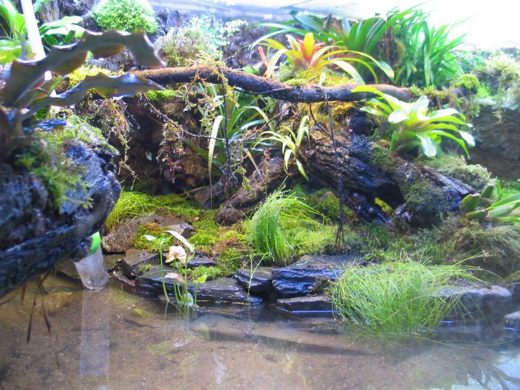Large vivarium construction page dendroboard terrarium