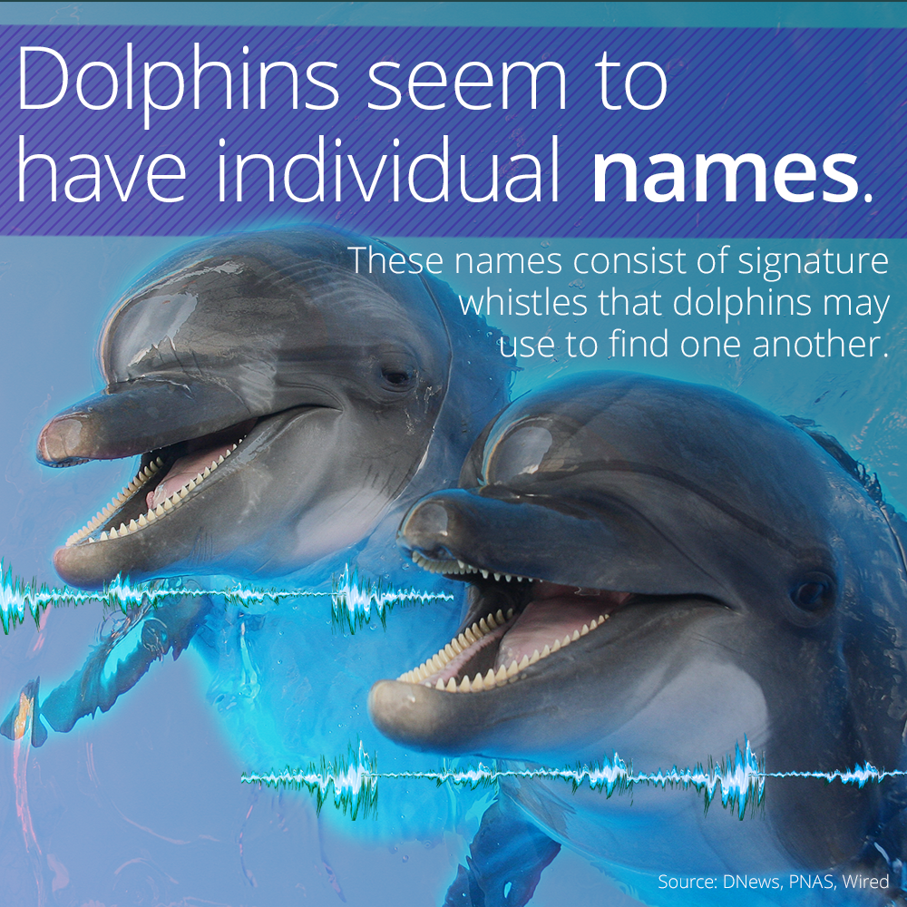 Dolphins Have Names For Each Other Dolphins, Fun facts