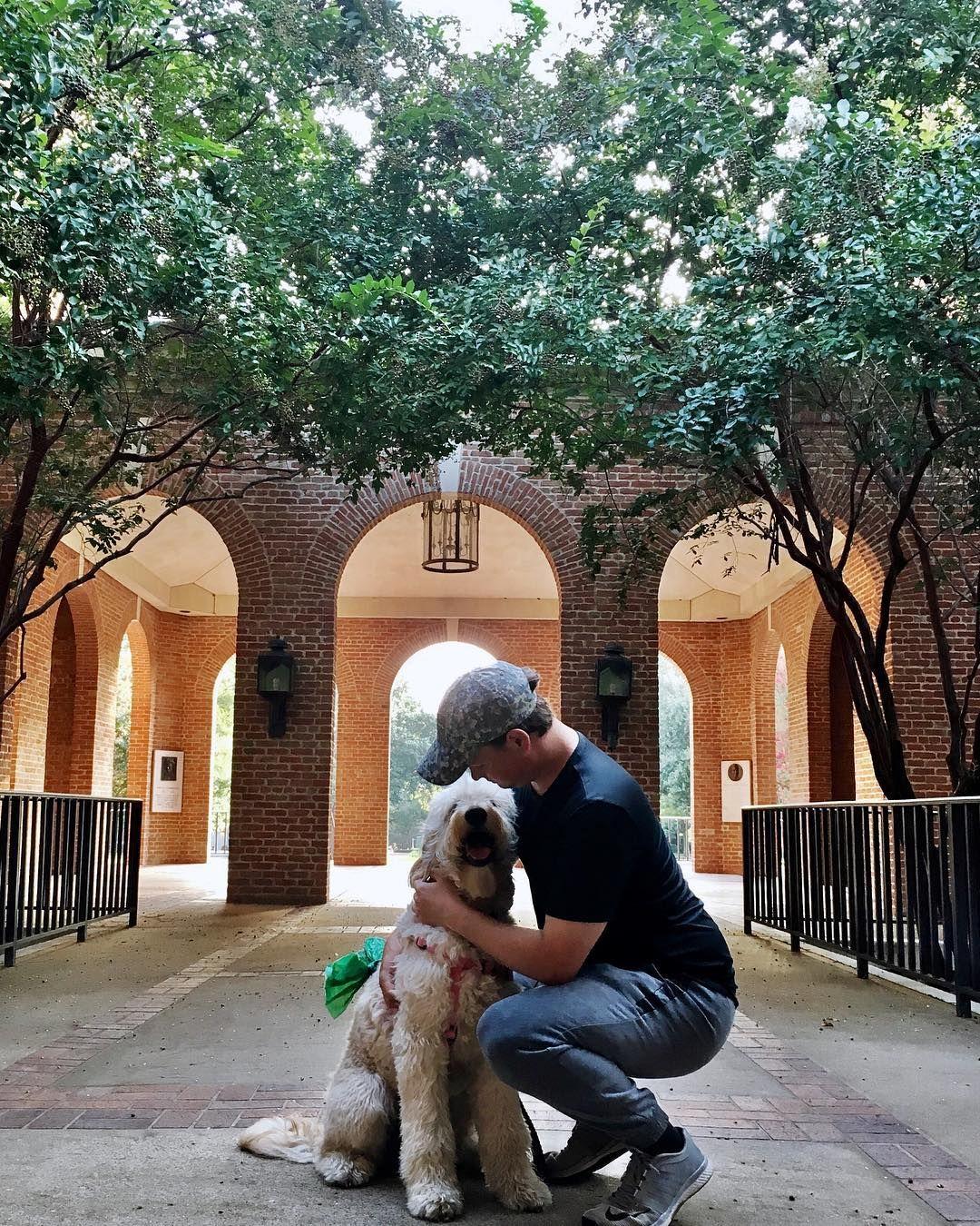Walks On The Baylor Campus Goldendoodle At Baylor University Goldendoodle Baylor Campus Dogs