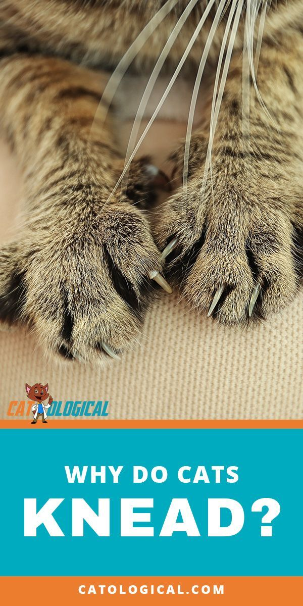 How to Stop a Cat from Spraying or Marking petMD Cats