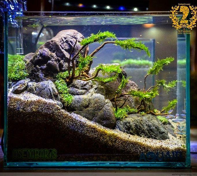Instagram. Nano AquariumAquarium AquascapeAquarium DesignTropical ...