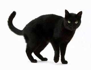 Tafsir Mimpi Kucing Hitam Menurut Islam Mati Gigit Tangan