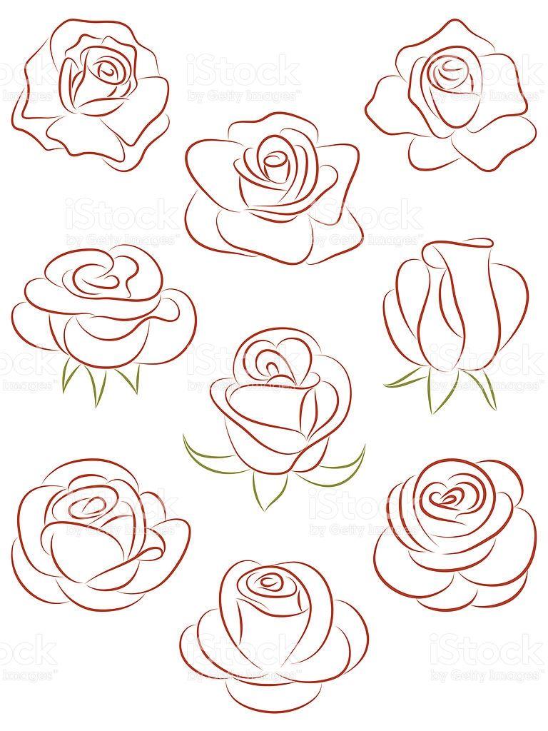 Set of roses. Vector illustration.  Flower drawing, Flower art
