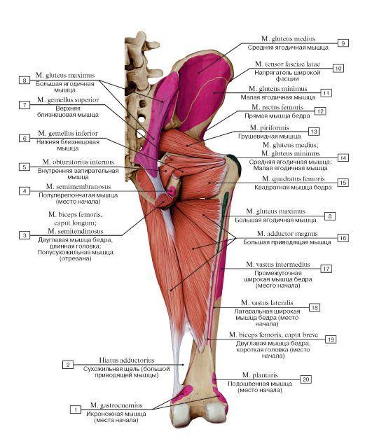 Anatomy Pinterest Menu And Anatomy