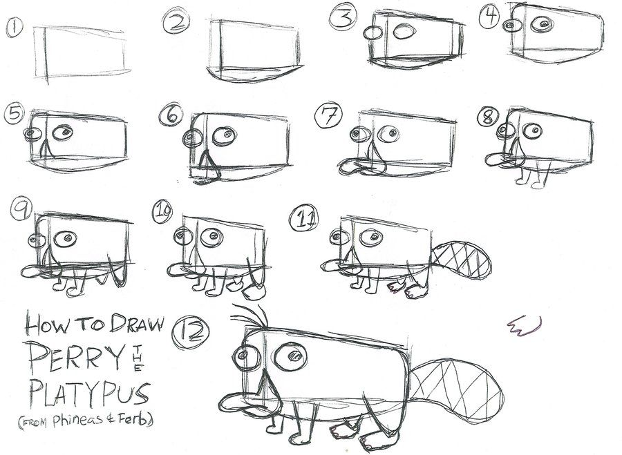 how to draw perry drawings pinterest drawings perry the
