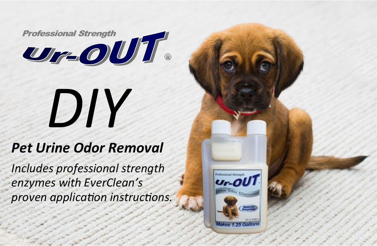 Here You Will Find Answers To Commonly Asked Questions Of How Remove Dog Urine Or Pet Odors From Your Carpet Note It Does In 2020 Pet Odor Remover Pet Odors Dog Urine