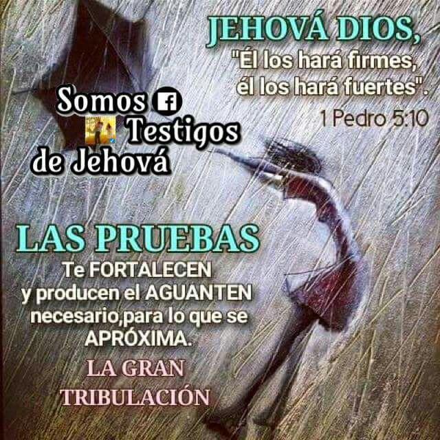 Biblia Matrimonio Entre Hermanos : Somos testigos de jehová andryregiino frases