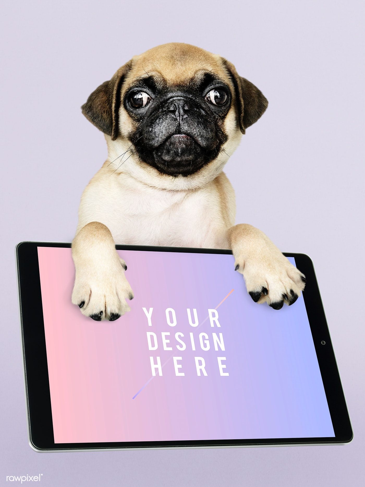 Download Premium Psd Of Adorable Pug Puppy With Digital Tablet