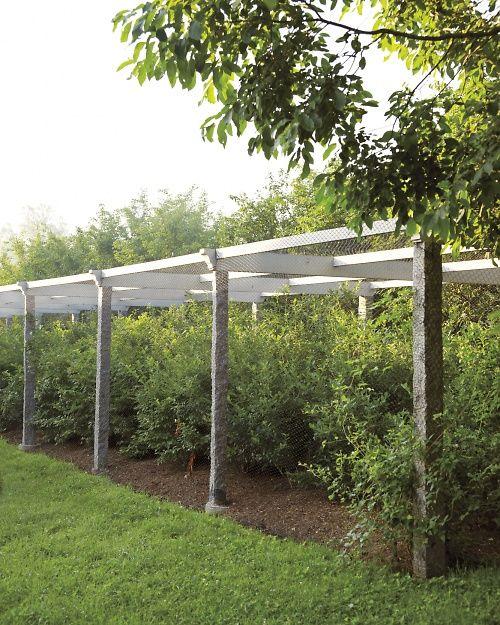 Martha S Berry Garden Blueberry Farm Fruit Garden Edible Garden