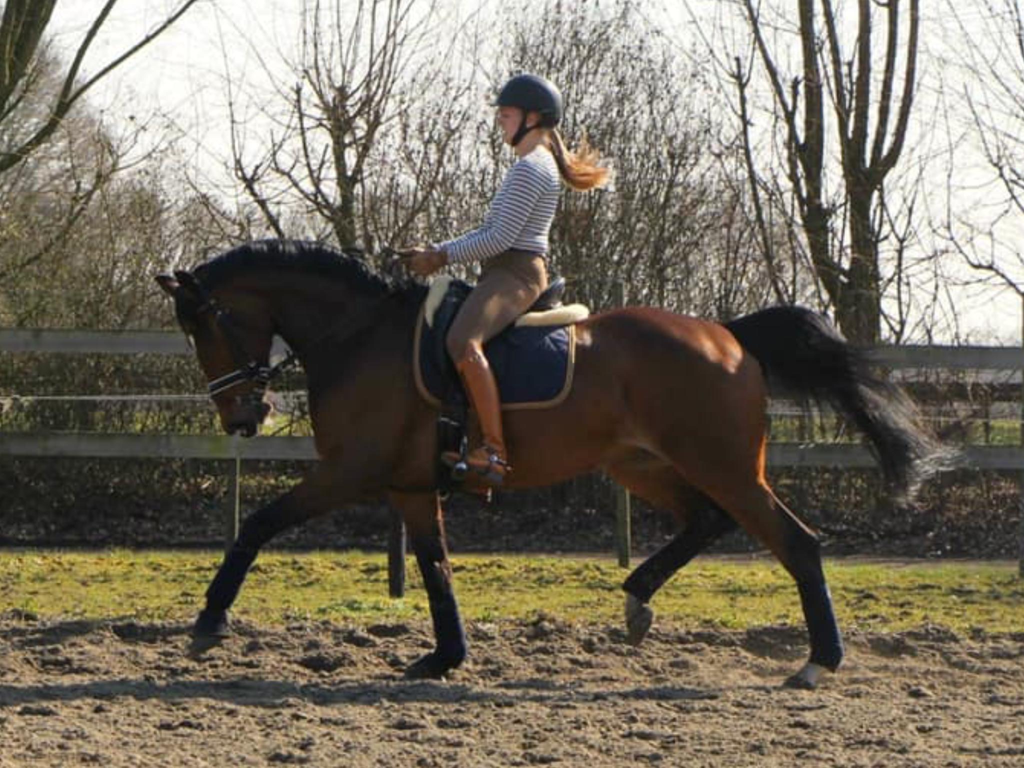 Pin Von Mallaury Auf Equestrian Pferd Und Reiter Pferde Reiten