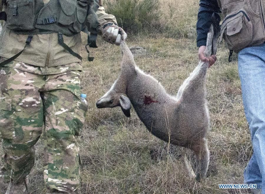Killing Kangaroos