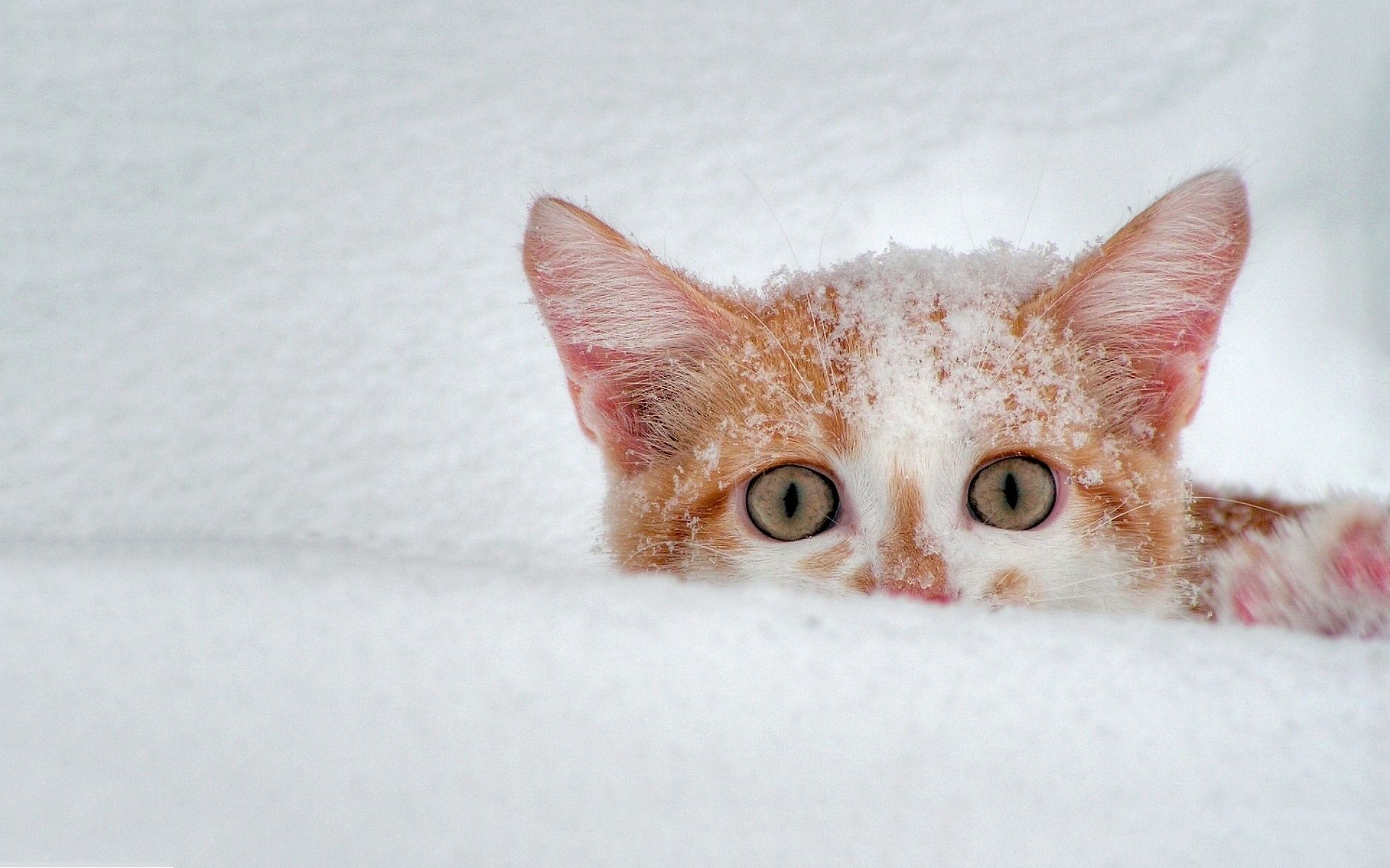 Cat Snow Scary Cats Winter Animals Crazy Cats