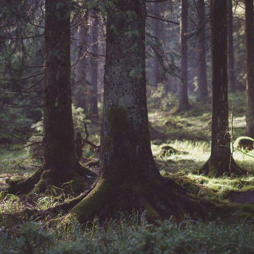 """noirerora: """"Sommer i skoven ved @noirerora"""""""
