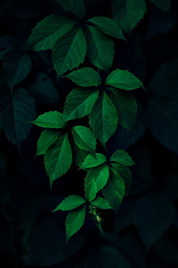 Nine Co Greens Dahon Flora Leaves Nature Nature Lover Plants Trees Tropical Photography Pinterest Tapete Grun Grune Natur Whatsapp Hintergrundbild