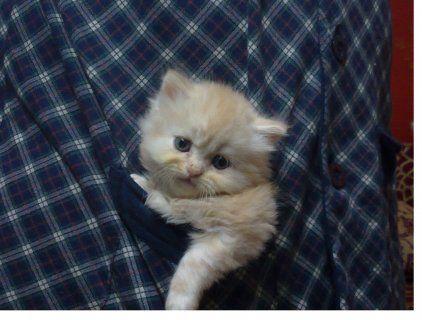 تم حذف هذا الإعلان من موقع سوق مصر الإعلان 146133 Pets Cats Animals