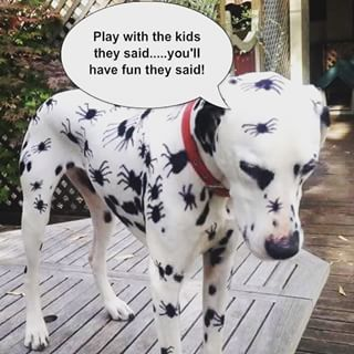 Dalmatian With Spider Spots Google Search Awesomely Funny Dog