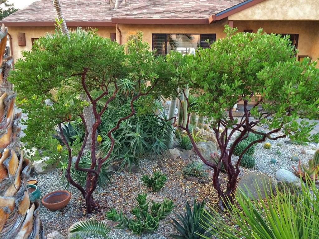 Image Result For Manzanita Landscaping California Native Garden Tree Garden Design Front Garden Path