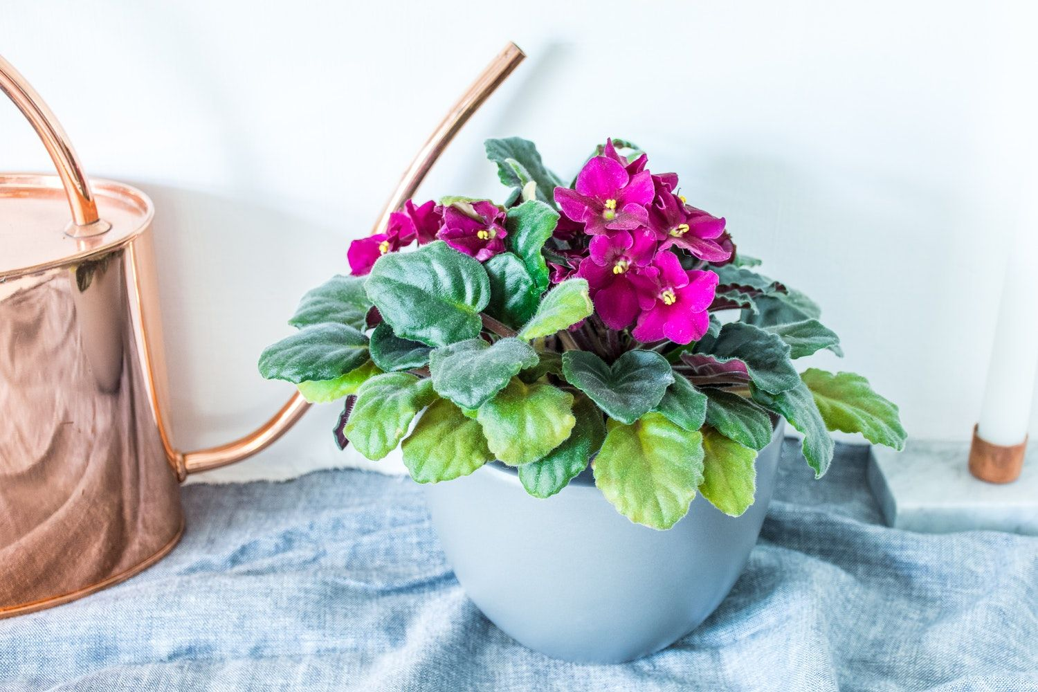 The Adaptable & Colorful Houseplant That Can Bloom All
