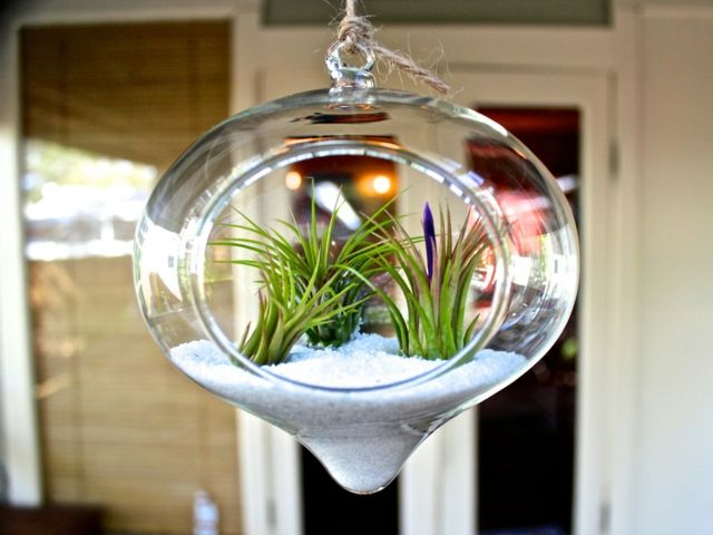 un terrarium de plantes magnifique pour votre maison. Black Bedroom Furniture Sets. Home Design Ideas