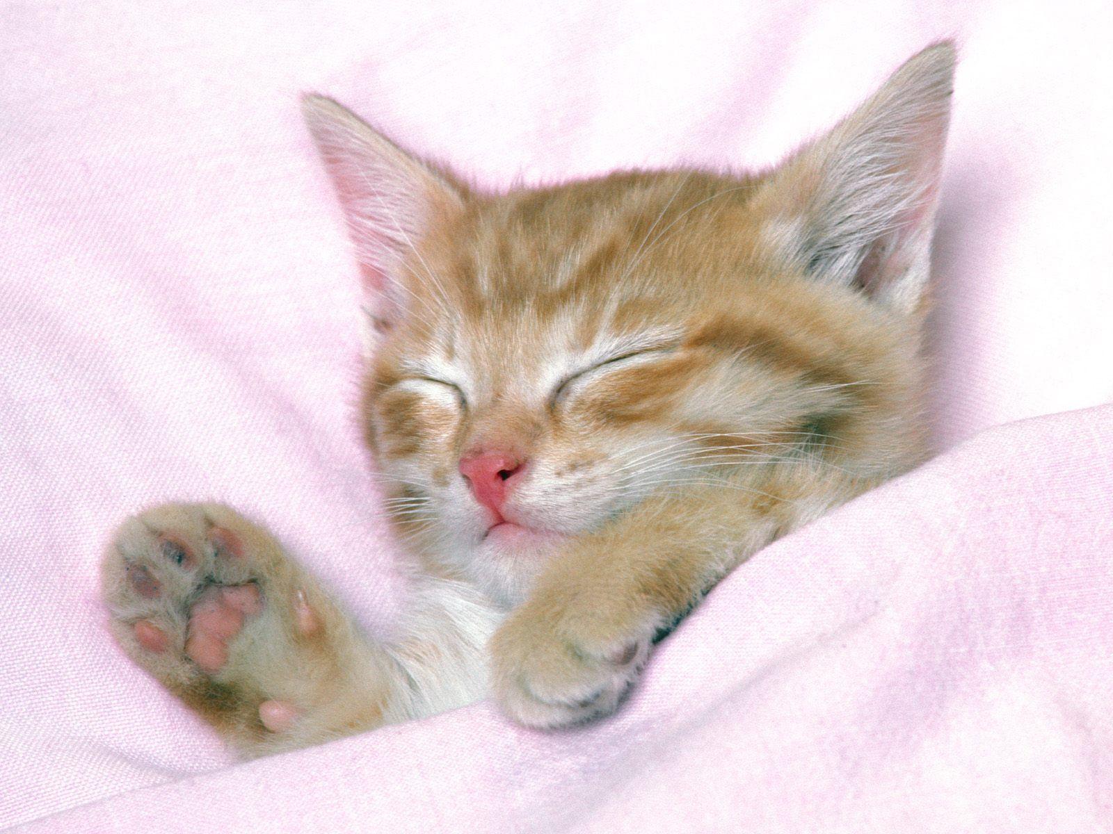 So Sweet Sleeping Kitten Cute Cats Kittens Cutest
