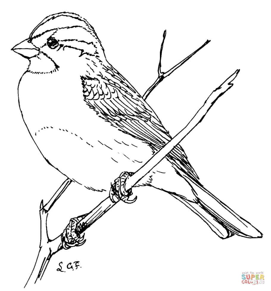 White Throated Sparrow Coloring Page From Sparrows Category