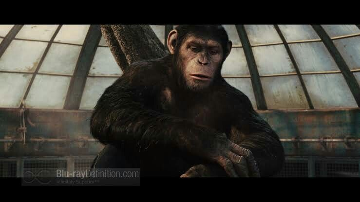 Caesar Planet Of The Apes Dawn Of The Planet Apes