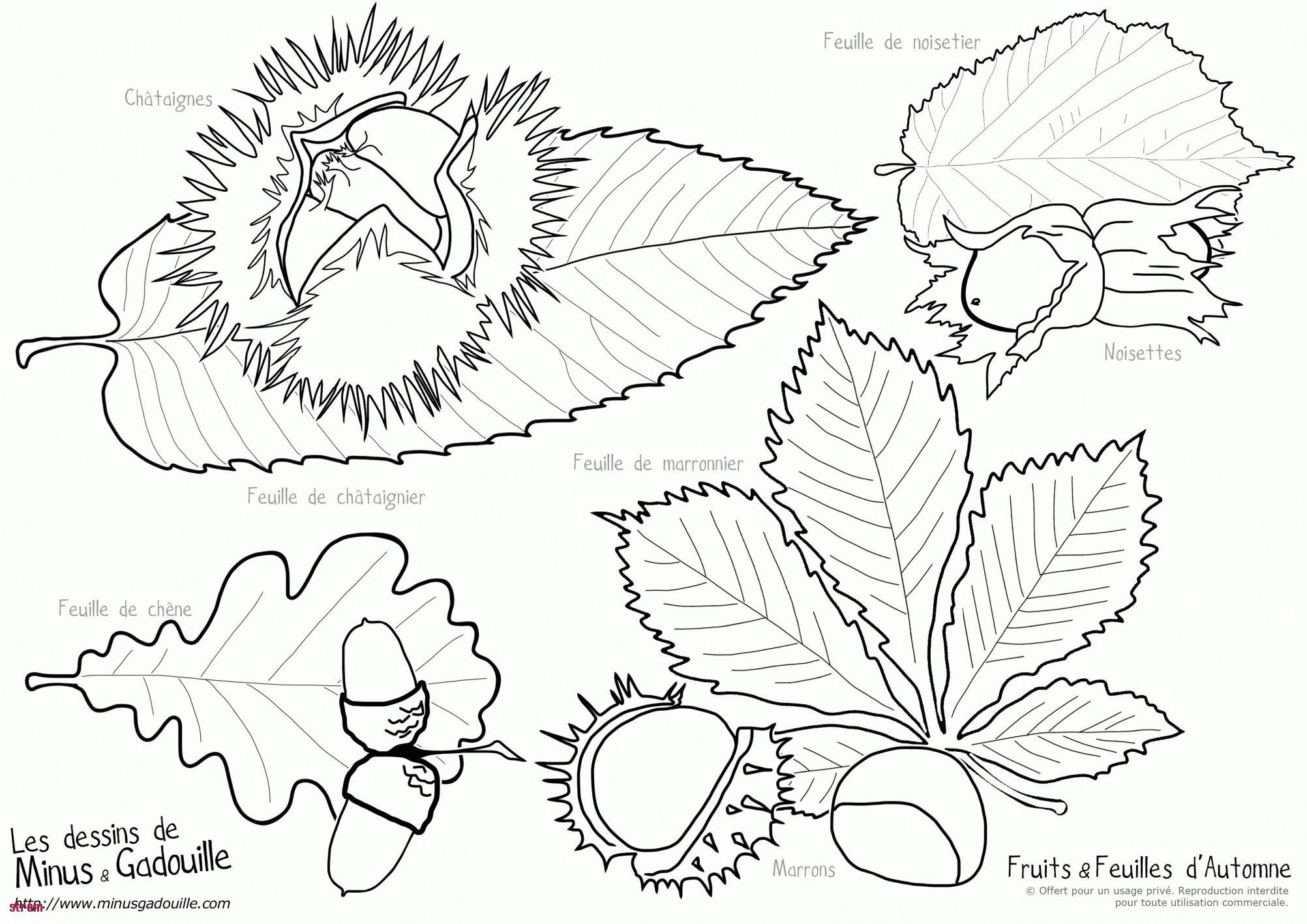 Coloriage Marron Fruit.Gabarit Feuille D Automne Meilleur De Photos Dessin D