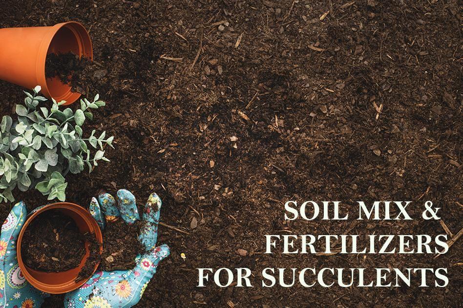 Soil Mix & Fertilizers for Succulents Garden soil