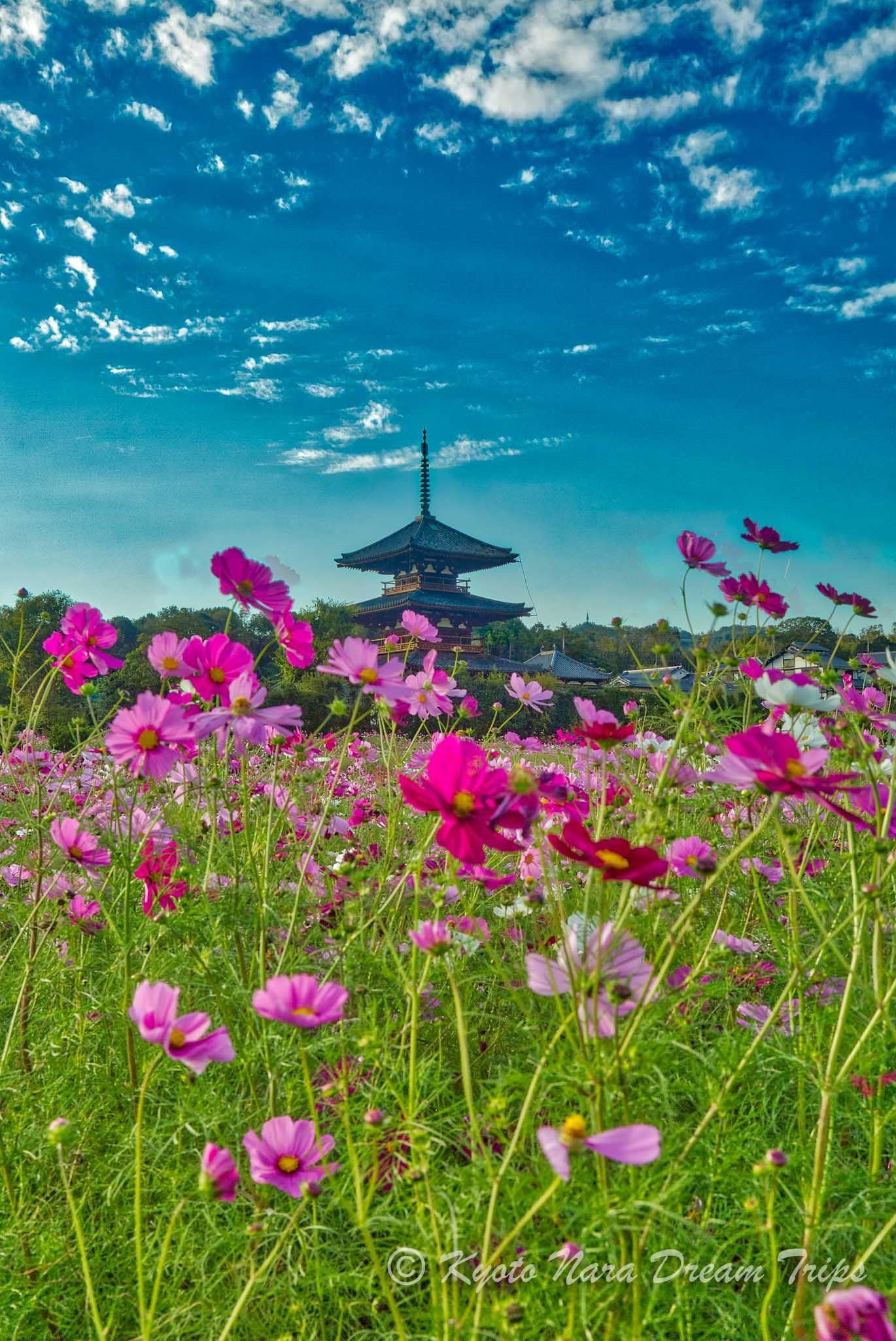 Random Pictures Of Nara Prefecture In Japan Nara Japan World Heritage Sites Japan