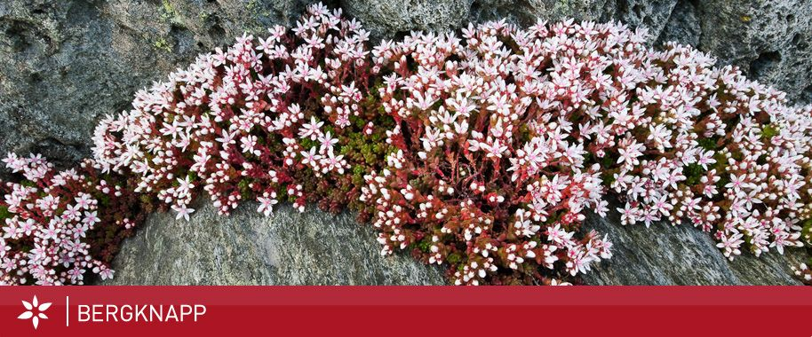 """Photo of Grasrota, """"blomsterbedd på rull"""", som tid for hjem. Bengt – Bygg, Reis deg. 265…"""