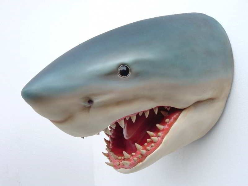 Shark Room Decor | Oh, And The Scary Shark Wall Décor (that We Are NOT  Getting) Can Be .