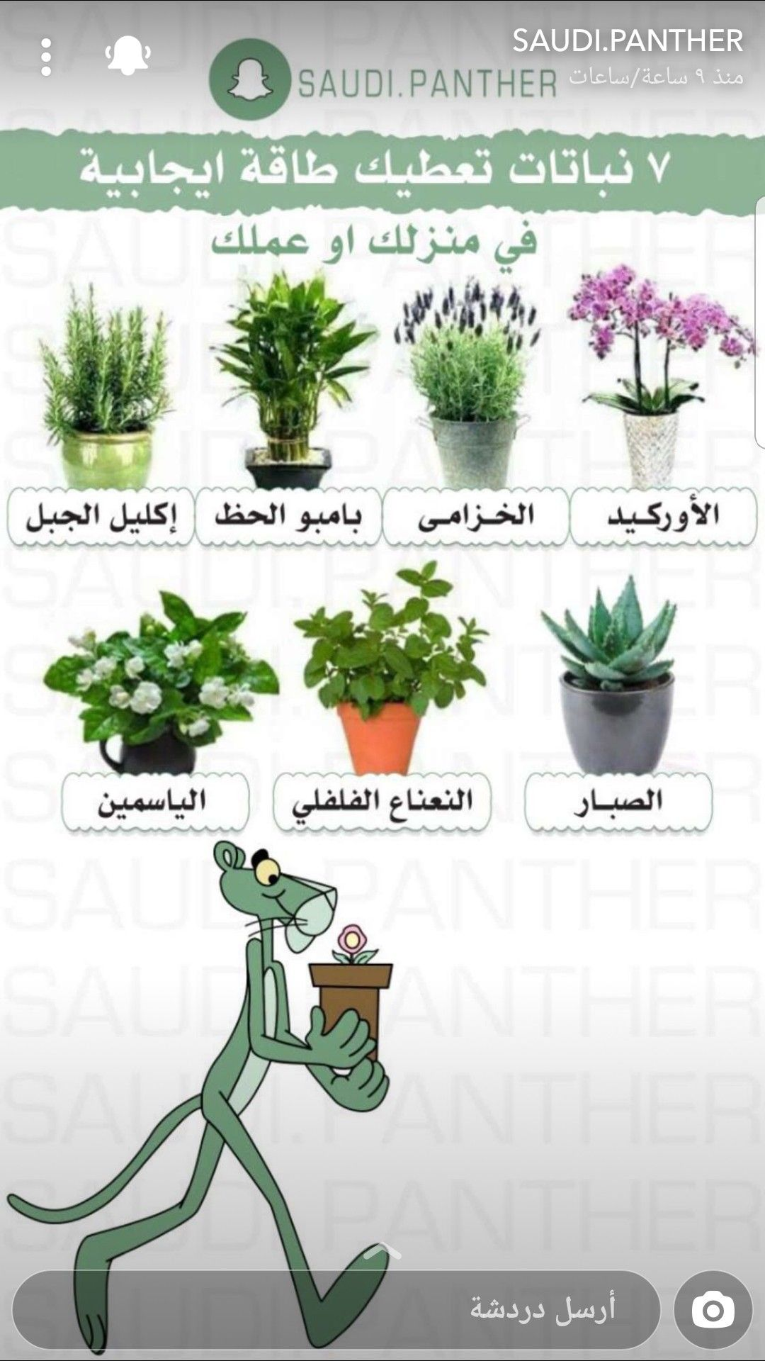 Pin By Amr On Plant In 2020 Vegetable Garden Diy House Plants Decor Vegetable Garden Planning