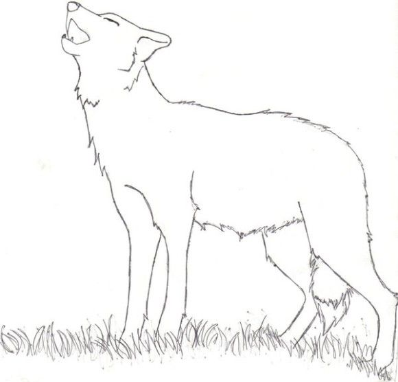Easy Howling Wolf Coloring Pages   1st Grade   Pinterest   Wolf and ...