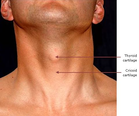 Related Image Anatomy Reference Anatomy Human Anatomy