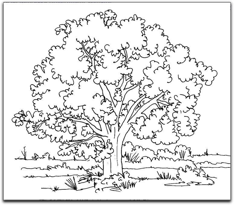 Cottonwood Tree Tree Coloring Page Christmas Tree Coloring Page Free Coloring Pages