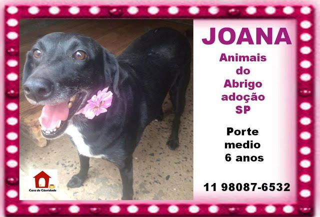 BONDE DA BARDOT: Urgente! Protetor está diabético e seus 35 cães precisam de adoção ou LT! http://goo.gl/OkltYt