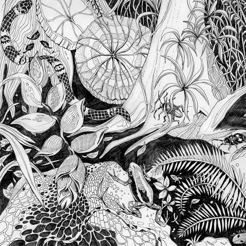 Jungle drawing, Fine Art Print, tropical decor, rainforest