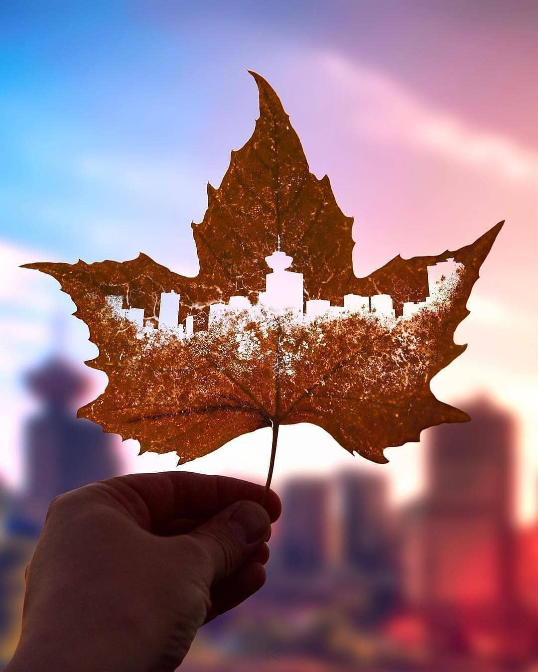 How Cool Is This Photo B Canada Day Images Canadian Thanksgiving Canada Day