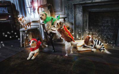 Celebrate It Halloween Pet Costumes Michaelsstores Pet