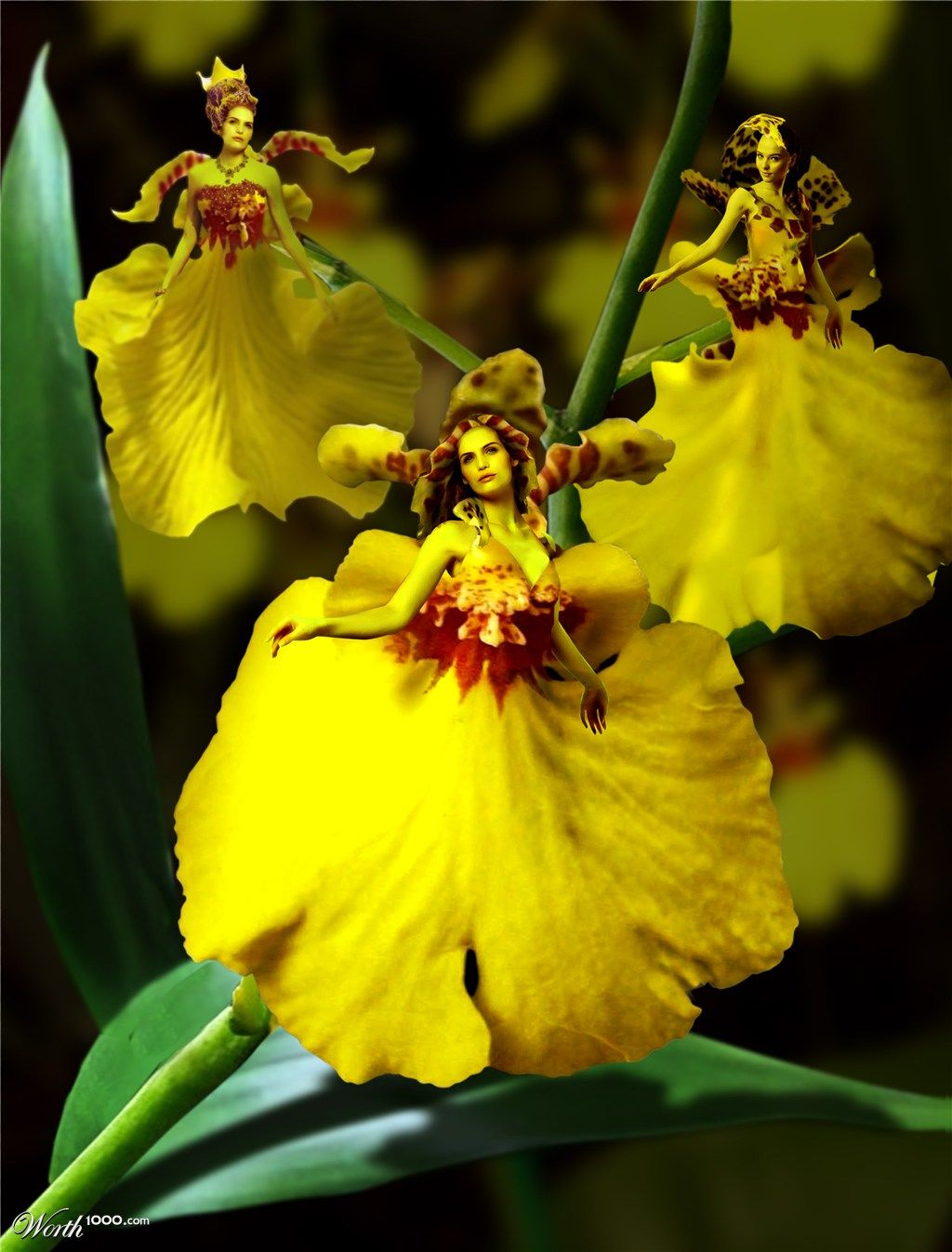 Dancing Lady Orchids By Homiecezz07